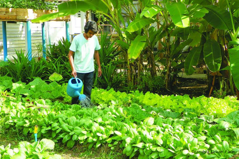 Organic vegetables gardening course